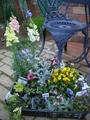 お花屋さんレポート(3)お花買ってきました♪