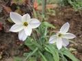 よく増えるお花たち
