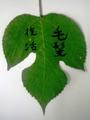七夕の神聖な植物―カジノキ・竹・笹