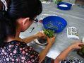多肉植物の実習