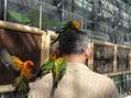 Ⅰ 箱根に行ってきました。掛川花鳥園