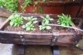 来春用の寄せ植え