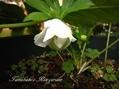 オリガミちゃん花盛り