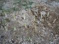 ネギの根っこを植えてみました