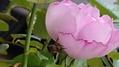 意外なミツバチさん