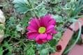 色々なお花たち