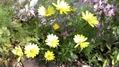 黄色いお花