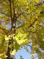 秋っぽいな。。。キミも(^ω^)