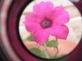 エラチが咲いたよ~~(*^^)v