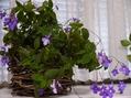 今育てている植物と手作り作品~♪