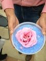 薔薇のドライフラワー