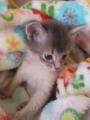 山茶花と子猫