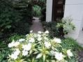 庭の入口に