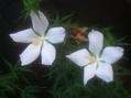 白い花いろいろ