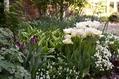 春のホワイト