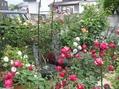 真夜と薔薇の庭