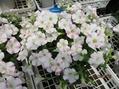 昨日は、花ひろばに行ってきました。