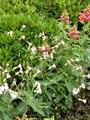 大和撫子さんのお花で、ご近所中花いっぱい!