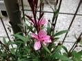 寄せ植えのお花など