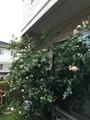 雨続きですが花も鳥も元気⁉︎