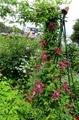 雨間に・・・・(庭の風景)