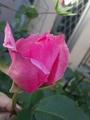 番外編(隣のバラ)1
