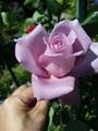 番外編(隣のバラ)2