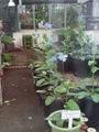 毎度の東京都立薬用植物園