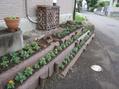 庭の植え替えをしました