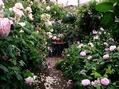 雨上がりのバラの庭②