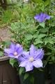 現在開花している植物から…その3