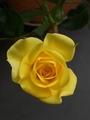 🐞黄色は幸運の色!?