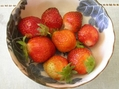露地イチゴが収穫時期です