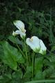 50cmほどのシュッと立つ花