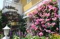 吉村さん邸へ花散歩してきました。