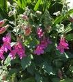 ボーダーガーデンのお花🌸