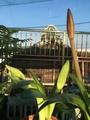 朝陽と蕾〜〜☀️🎵