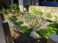 トマトの苗を植えつけ