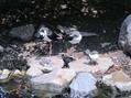 花鳥園(鳥編①)