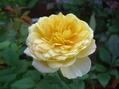 ポツポツと咲く花