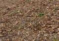 腐葉土からセシウム。家庭菜園-人体への影響は?
