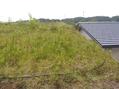 草屋根のメンテナンス