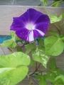 班入り植物