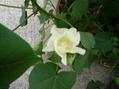 同じ木から違う色の花って咲くの?