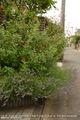 我が家の庭(西側)