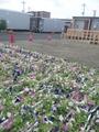 咲かそう日本プロジェクト
