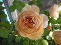 2番花が咲きました~