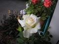 2番花が咲きました~ 2