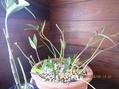観葉植物とラン