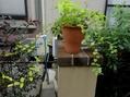 庭の カラーリーフとつるもの